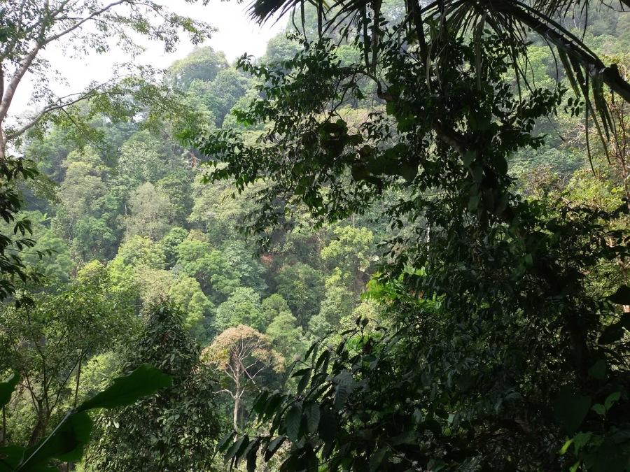 hutan lindung peetungkriyono