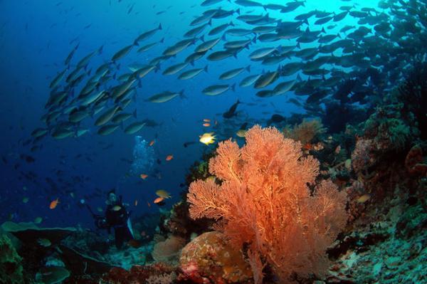 raja ampat bawah laut