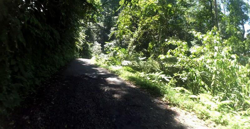 Hutan Sokokembang Petungkriyono
